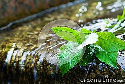 Machen Sie Blätter naß