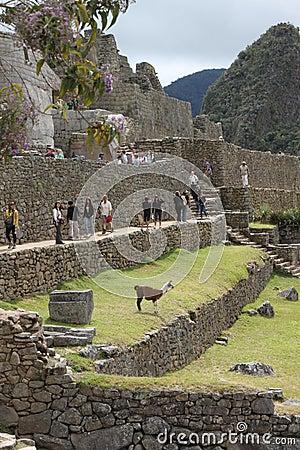 Machu Picchu houses Editorial Photo