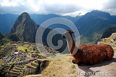 Machu Picchu and the Lama