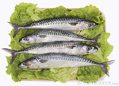 Mackerel ( fish )