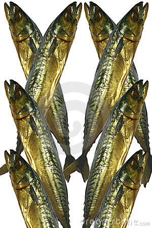 Mackerel of smoked, 8 features