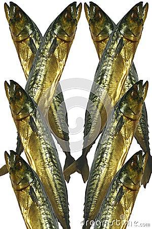 Mackerel of smoked, 8 features