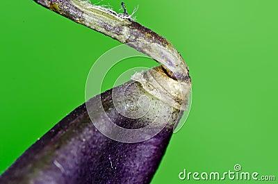 Macro bean