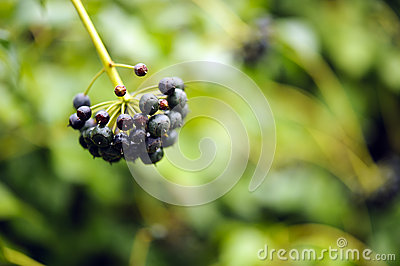 Macro berries shot