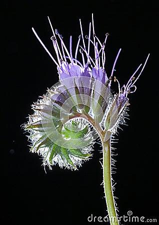 Free Macro Blooming Flower Royalty Free Stock Photos - 25119168