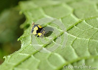 Macro bug