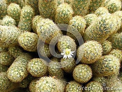 Macro Cactus