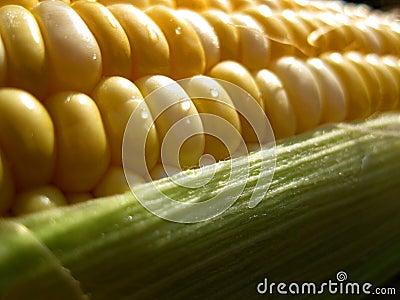 Macro of corn kernals