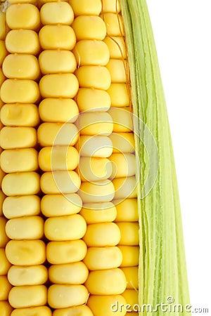 Macro corncob