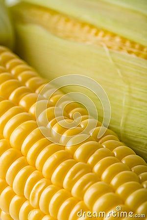 Macro de los granos frescos del maíz