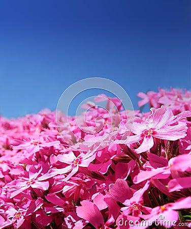 Macro detail of purple flowers