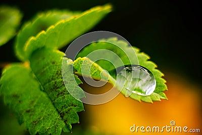 Macro drop of water