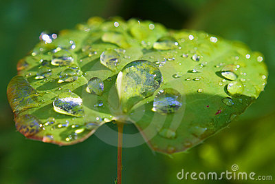 Macro of droplets on sunlit green leave: dew point