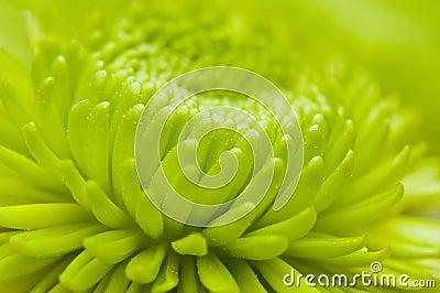 Macro flower petal pattern