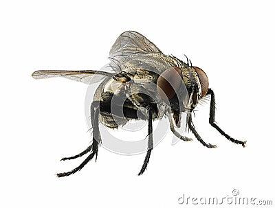 Macro on fly