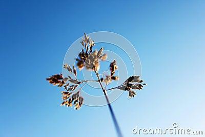 Macro Grass Stalk