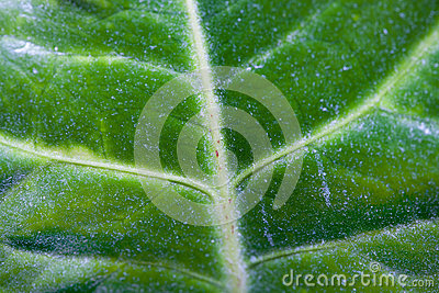 Macro of green leaf with a spiderweb