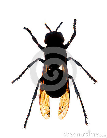 Wasp silhouette