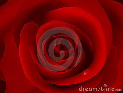 Macro image of dark red rose with water droplet.