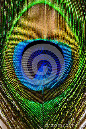 Free Macro Image Of Peacock Feather/Peacock Feather Stock Images - 41889184