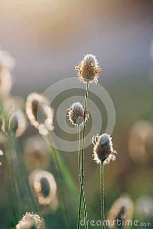 Free Macro Of A Plant Stock Image - 56761081