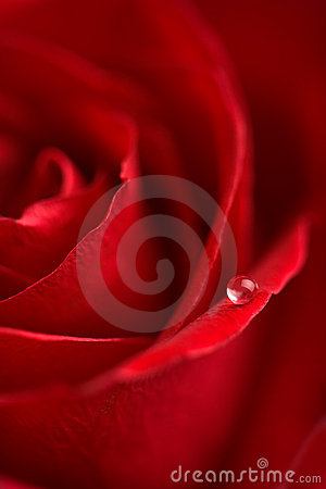 Free Macro Of Red Rose With Water Drop Stock Images - 7398354