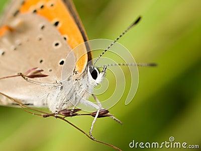 Macro of a orange butterfly