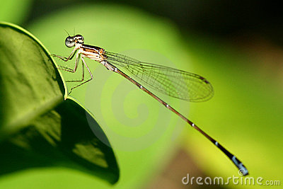 Macro photograph of damselfly