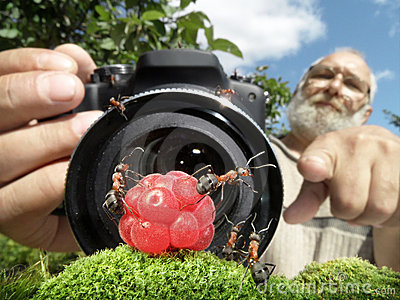 Macro photographer managing  ants