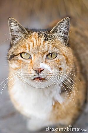 Macro Photography Cat