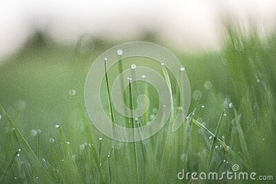 Macro Photography Of Grass With Water Drops During Daytime Free Public Domain Cc0 Image