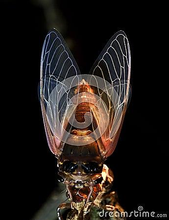 Macro photography—cicada