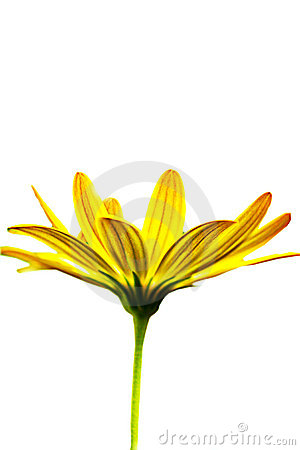 Free Macro Picture Of A Yellow Flower Royalty Free Stock Photos - 11533728