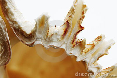 Macro shells