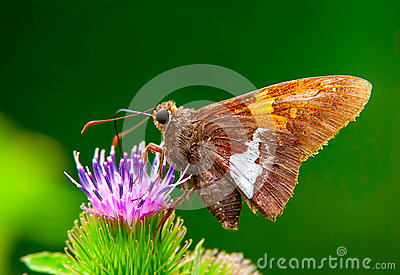 A macro shot of butterfly feeding on a flower