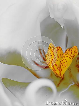 Macro shot of orchid