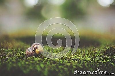 Macro Shot Photography Of Brown Snail Free Public Domain Cc0 Image