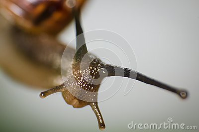 Macro shot of snail.
