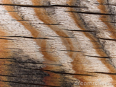Macro texture - striped wood surface