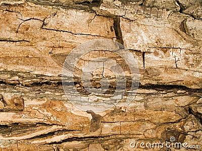 Macro texture - wood - tree bark