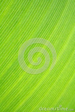 Macro of a tropical leaf