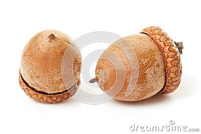 Macro of two acorns