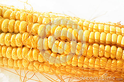 Macro view of corn cob
