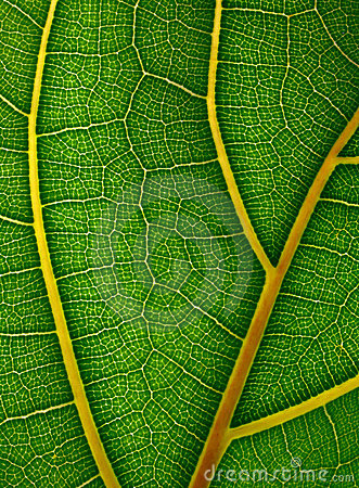 Macro view of green leaf