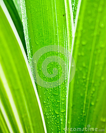 Macro of water drops on green leaf
