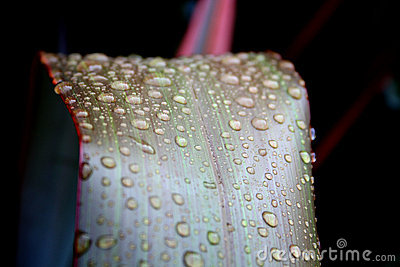 Macro of Water Drops on Leaves