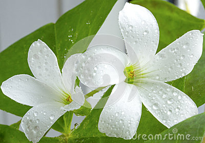 The macro of white flower