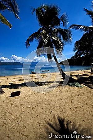 Free Madagascar  Branch Boat Palm Lagoon And Coastline Royalty Free Stock Photo - 52900405