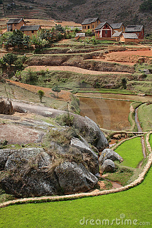Madagascar highland rice paddies