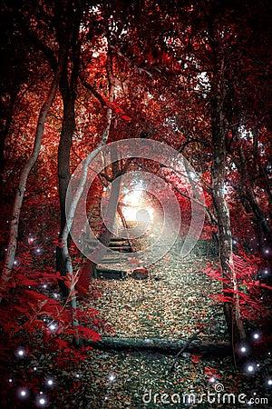 Madeira Enchanted